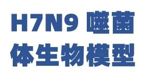 H7N9噬菌体生物模型
